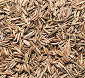 Caraway Caraway Seeds Indian Name